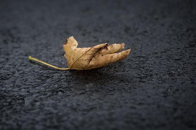 leaf-1845468_640